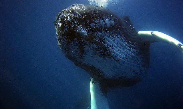 Protected: What Whale Totems Teach You About Life